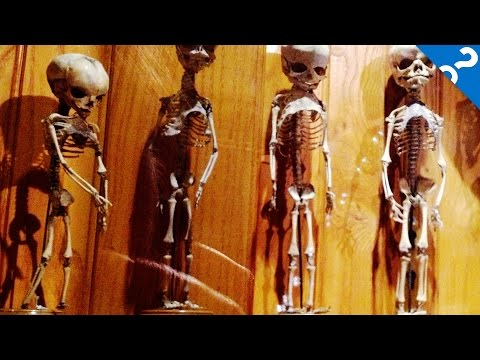4 Weird Museums You Really Should Visit   What the Stuff?!