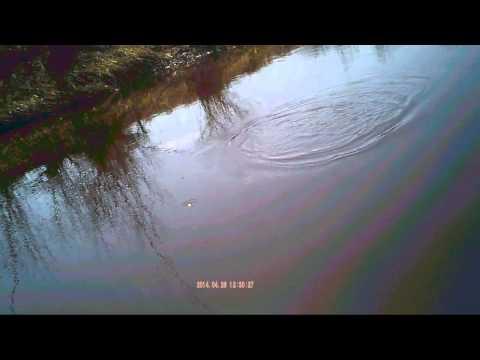 ловля плотвы весной на поплавок на течении
