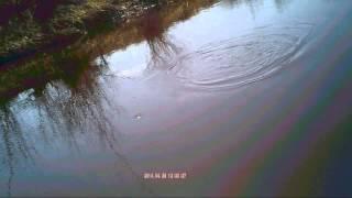 Ловля плотвы на течении на малых реках, на поплавочную удочку.Видео rybachil.ru Отчёт весна 2014.