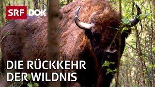 Reno Sommerhalder – Die Rückkehr der Wildnis in der Schweiz | Doku | SRF DOK
