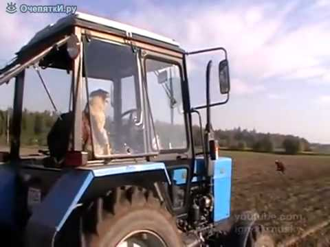 dog driving a tractor - YouTube