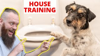 Beginners Guide To House Training A Puppy
