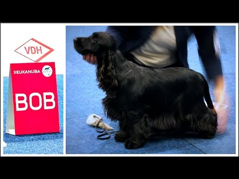 World Dog Show 2017 | BOB English Cocker Spaniel