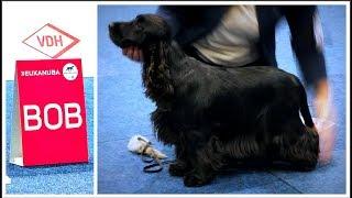 World Dog Show 2017 | BOB English Cocker Spaniel