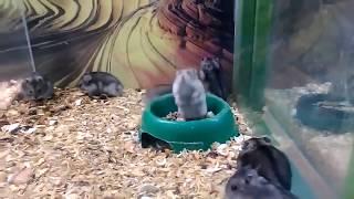 Smieszne Zwierzęta #10: Zepsuty chomik!