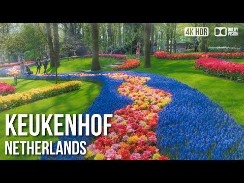 Keukenhof, Garden Of Europe - 🇳🇱 Netherlands - 4K Virtual Tour
