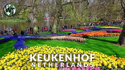 Keukenhof, Garden of Europe - 🇳🇱 Netherlands - 4K Virtual Tour