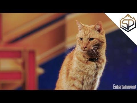 Интервью с котом по кличке Гусь   Капитан Марвел