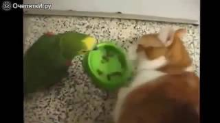 Попугай и кошка прикол