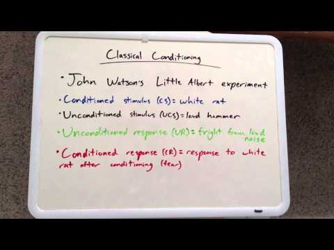 Learning [Part 1/3] - AP Psychology Review