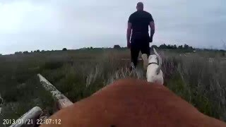 DOG with GOPRO cam strapped to Her back  3