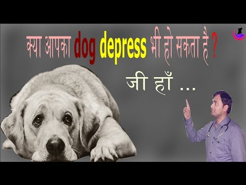 Do you know? Your dog may go under depression
