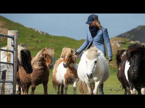 Viking Oceans: Shetlands! The World's Favorite Ponies