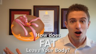 Where Does Fat Go When You Lose It?