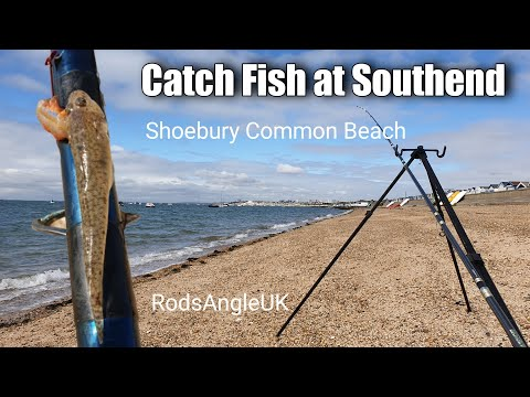 Catch Fish At Southend: SHOEBURY COMMON BEACH