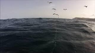 Pesca submarina en Canarias 2018 Adrian Gonzalez