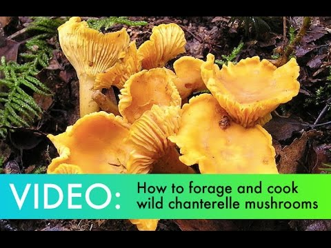 DIY: How to Find, Forage and Cook Your Own Wild ...