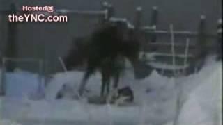 Man Nearly Trampled to Death (w obronie dziecka )
