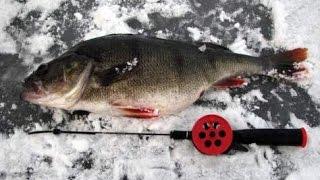 Зимняя рыбалка, Январь 2016, Дон, Очень крупный окунь!.