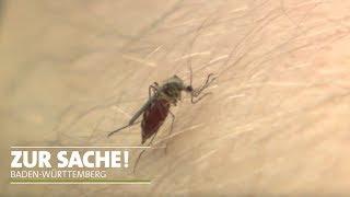 Was tun gegen die drohende Stechmückenplage? | Zur Sache! Baden-Württemberg