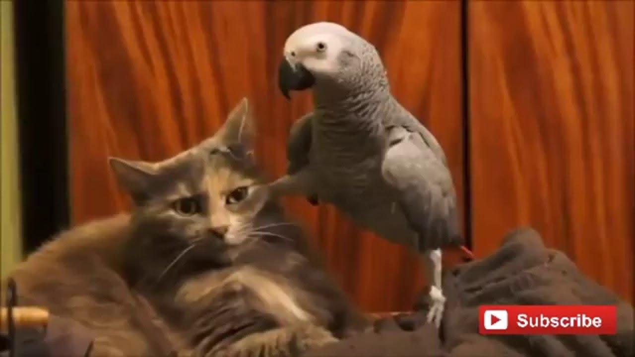 Кот и попугай и чё