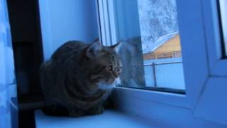 Кот ругается на синиц за окном