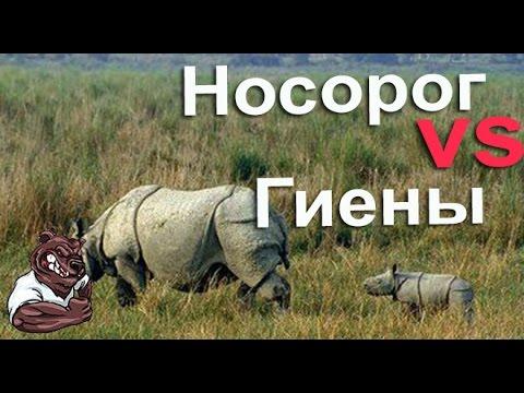Животный и растительный мир Евразии: описание обитателей