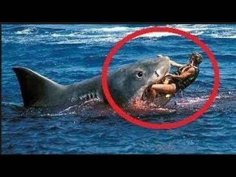 【グロ注意】サメによる凄惨で残酷な食害事件3選
