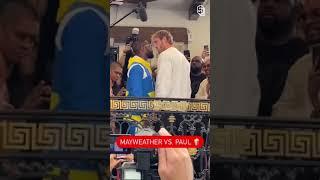 Mayweaths vs PAUL STANDOFF 👀