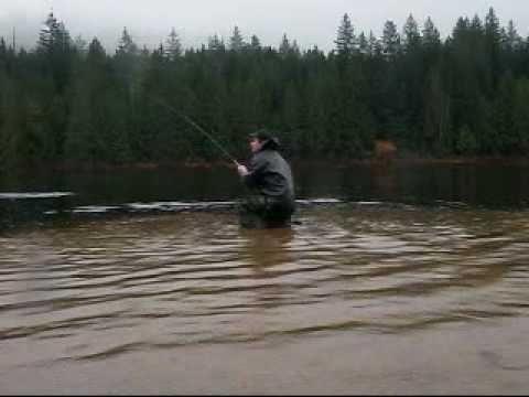large coastal cutthroat trout