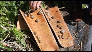NA L'élevage d'escargots, une alternative pour la reconversion des éleveurs de bétail