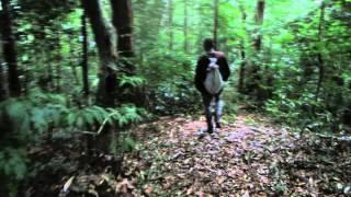【カンボジア】アオラル山 登山2日目#3(山頂~第2キャンプへ下山)