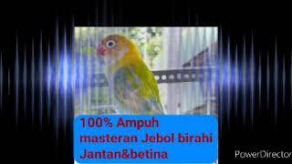 Download lagu Masteran birahi Lovebird jantan&betina#bunyi