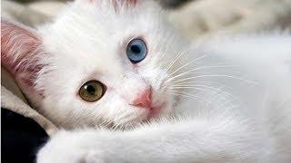 صور قطط كيوت | جمل قطط مضحكة 2017 - قطط مضحكة جدا |  أحلى صور لأجمل قطط في العالم