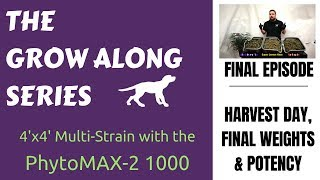 4 x 4   Multiple Strains   PhytoMAX-2 1000   Grow Along   Final Episode