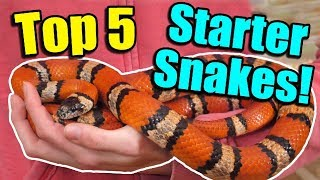 The Top 5 BEST Beginner Snakes!
