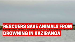 Assam floods: Wildlife rescuers save animals from drowning in Kaziranga