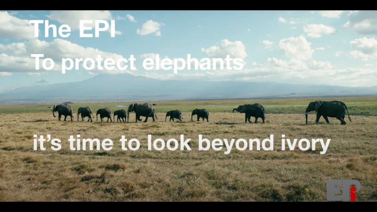 To protect elephants it's time to look beyond ivory