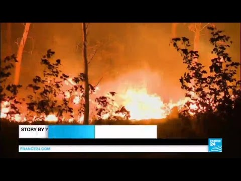 France fires: 2700 hectares of land ravaged in Marseille region