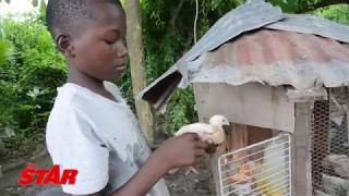 Boy plans to fix poverty with chickens