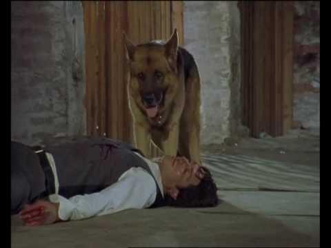 Rex chien flic - La mort de Moser