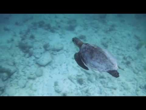 Snorkeling with Turtles - Klein Curaçao
