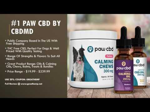 BEST CBD OIL BRANDS FOR DOGS 2020 - MUST WATCH BEFORE YOU BUY!