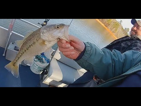 Bass Fishing, Local Clowns Drive By, And Bonus Stuff (near Clemson, SC On  Lake Hartwell)