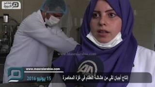 مصر العربية | إنتاج أجبان تقي من هشاشة العظام في غزة المحاصرة