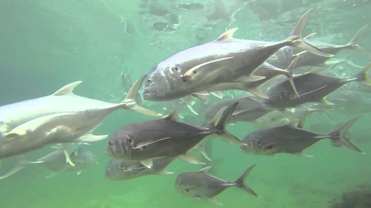 Incredible Underwater Camera Footage At Saltwater Marina
