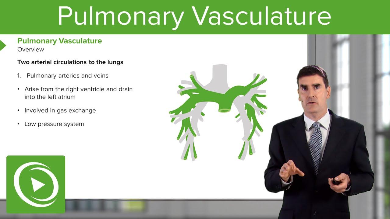 Pulmonary Vasculature Respiratory Medicine Medical Education