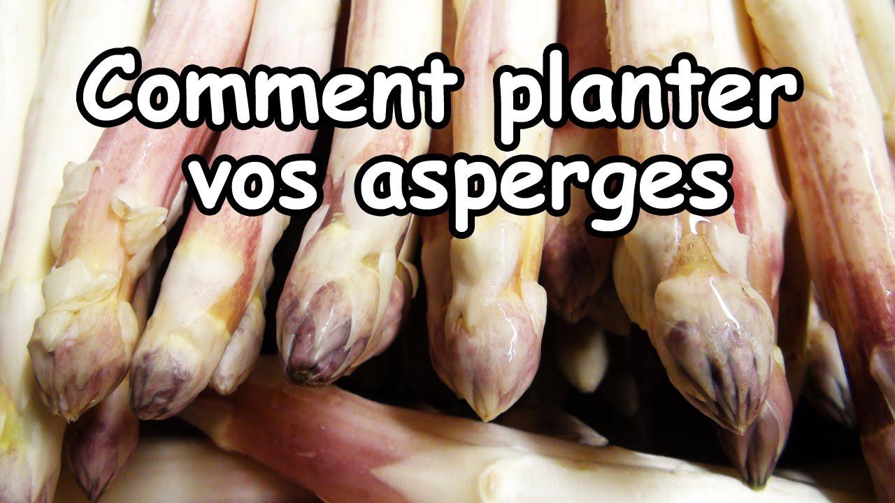 Comment Planter Des Asperges réussir la plantation des asperges