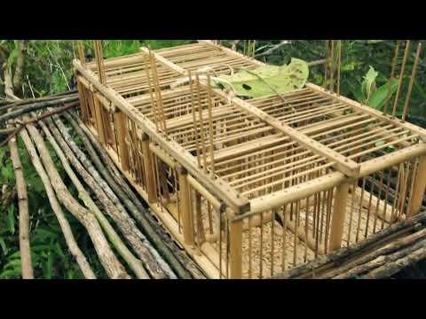 Hmoob Toj Siab Cuab Piv Pt 7 Hmong Technology Cage