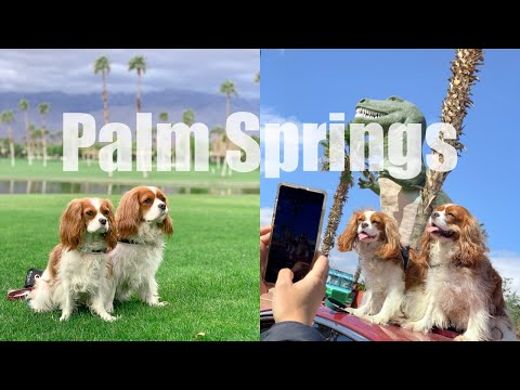 DOG FRIENDLY STAY IN PALM SPRINGS